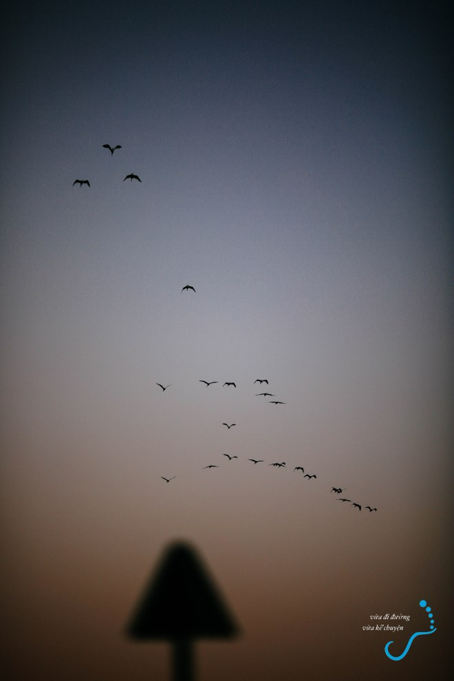 Đàn sếu bay qua